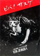 ビバ!サスケ 子猫の風景 | 深瀬昌久 写真集