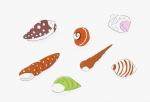 安西水丸ポストカード | 貝殻