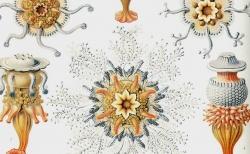 すべては目と心の娯しみのために。博物学者が創造した図像の世界「ファンタスティック12 シリーズ」