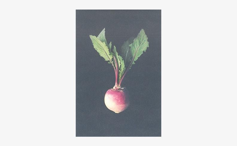 ポストカード Vegetable 1 | S/S/A/W たかはしよしこ