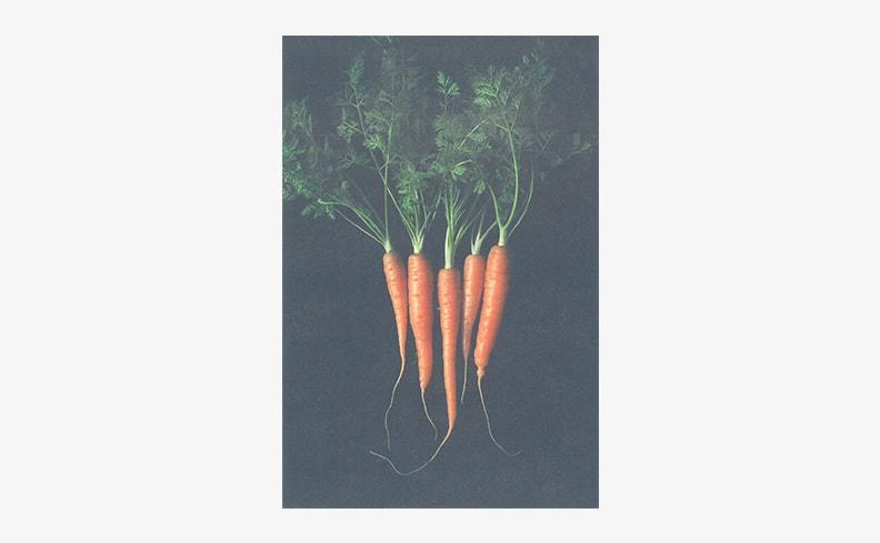 ポストカード Vegetable 2 | S/S/A/W たかはしよしこ