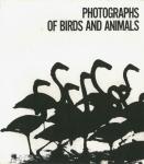 Photographs of Birds and Animals | 山口彰亮
