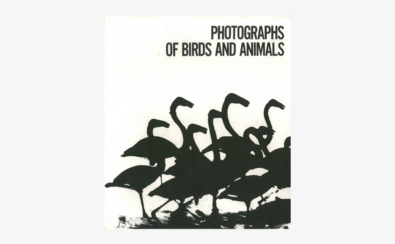 Photographs of Birds and Animals | 山口彰亮