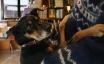 今更ですが、はじめまして。ノストスブックスの看板犬、モグーを紹介します!