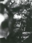 エロネガポリス 右眼墓地 | 荒木経惟