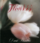 Flowers | David Hamilton デイヴィッド・ハミルトン