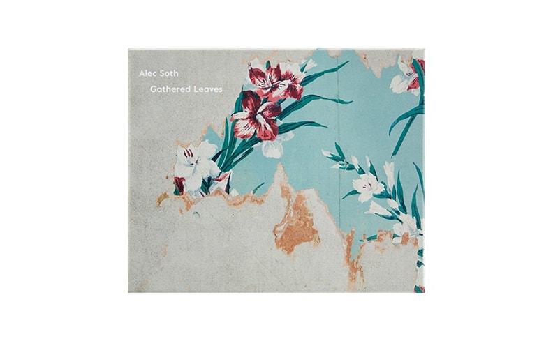 Gathered Leaves ポストカード | Alec Soth アレック・ソス